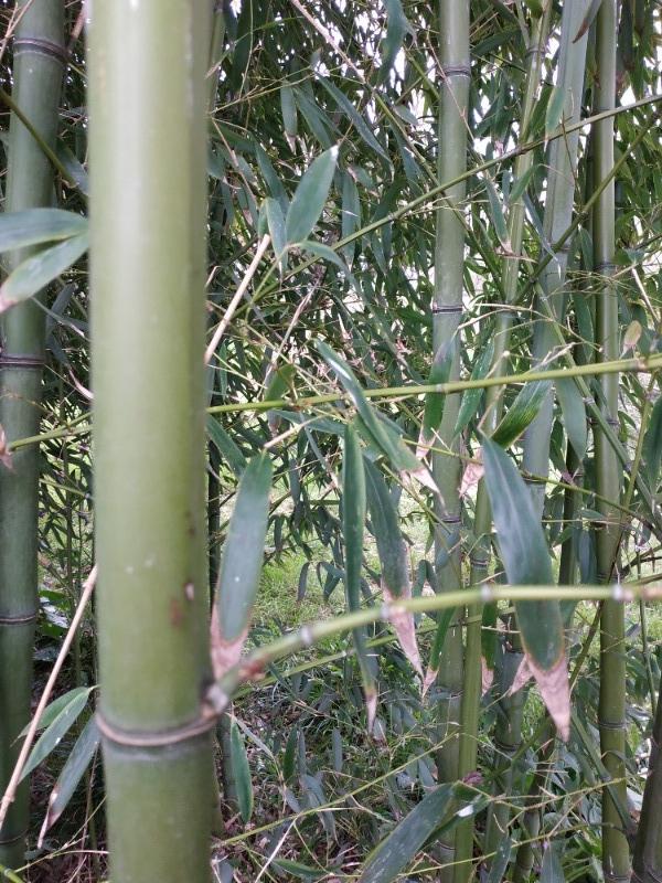 Recyclage, Récupe & Don d'objet : bambous