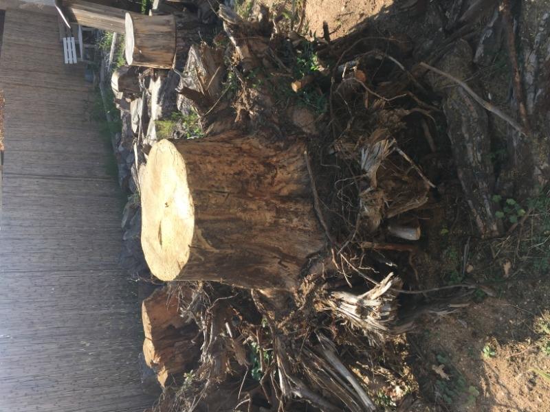 Recyclage, Récupe & Don d'objet : souche d'arbre
