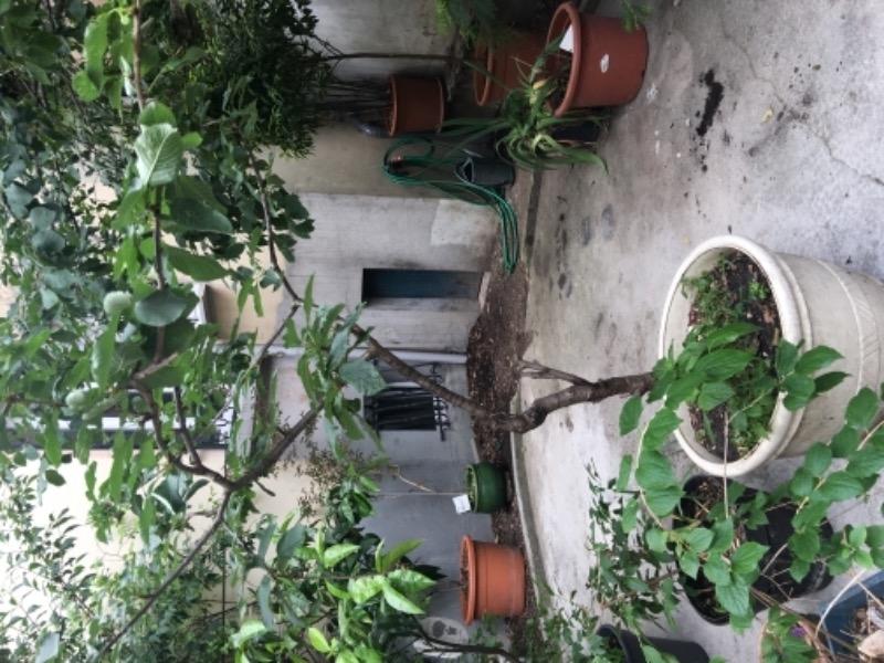 Plantes, Fleurs - Brico - Jardin