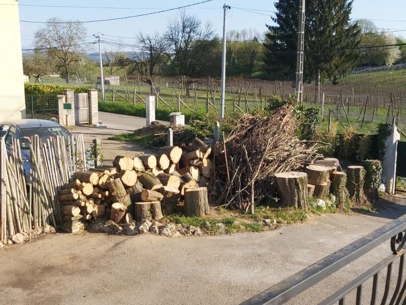 Recyclage, Récupe & Don d'objet : bûche et branche cyprès