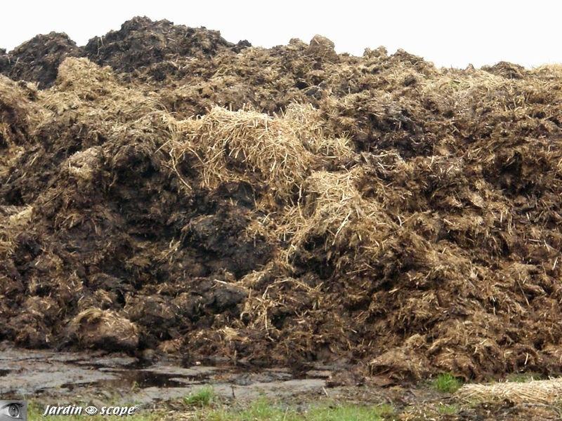 Recyclage, Récupe & Don d'objet : crottin cheval