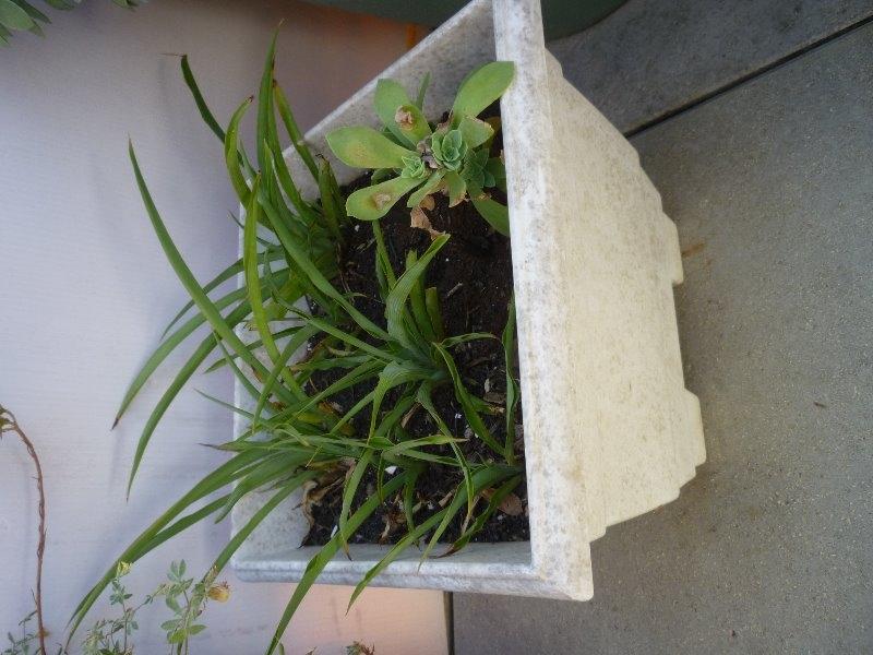 Recyclage, Récupe & Don d'objet : plante grasse sans le pot et les arbustes