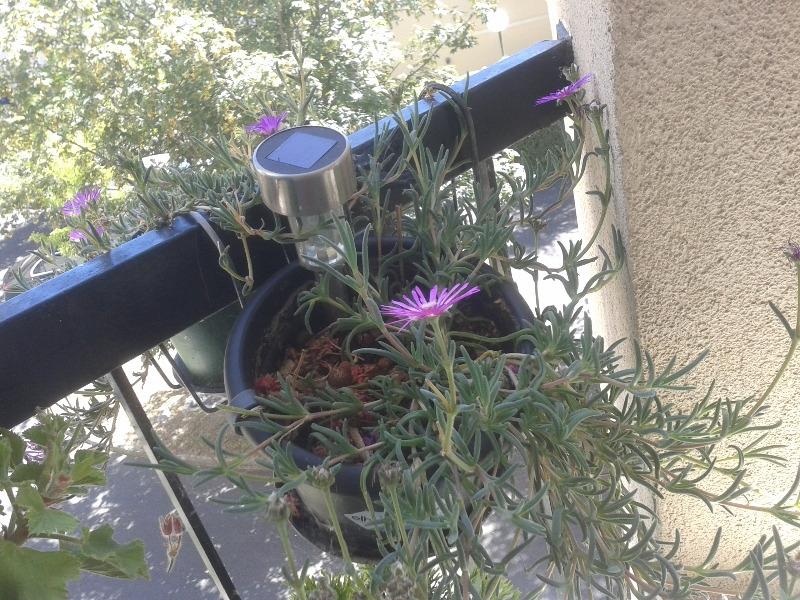 Recyclage, Récupe & Don d'objet : plante de gazon