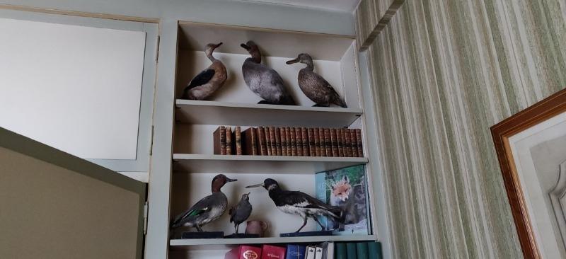 Recyclage, Récupe & Don d'objet : collection d'oiseaux empaillés