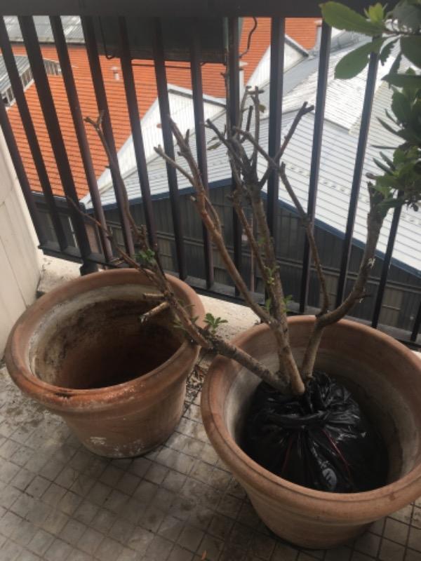 Recyclage, Récupe & Don d'objet : pot de plantes